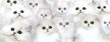 tinypersians.com